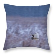 Short Eared Owl Hunting 3 Throw Pillow