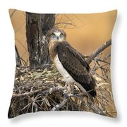 Short-toed Snake Eagle Circaetus Gallicus Throw Pillow