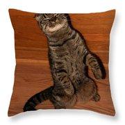 Shorthair Scottish Fold Cat Throw Pillow
