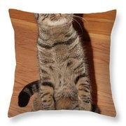 Shorthair Scottish Fold II Throw Pillow