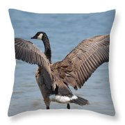 Show Of Feathers Throw Pillow