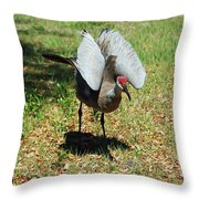 Show Off Throw Pillow by Aimee L Maher Photography and Art Visit ALMGallerydotcom