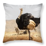 Show-off Modern Throw Pillow
