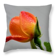 Showered Rose Bud Throw Pillow