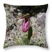 Showy Lady's Slipper 1 Throw Pillow