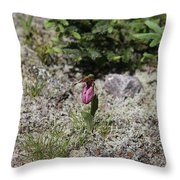 Showy Lady's Slipper 3 Throw Pillow