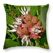 Showy Milkweed Along Hog Canyon Trail On Tour Of The Tilted Rocks In Dinosaur National Monument-utah Throw Pillow