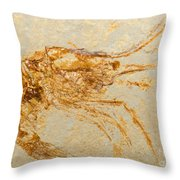 Shrimp Fossil Throw Pillow
