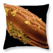 Shrimp Plant Sem 1620x Throw Pillow