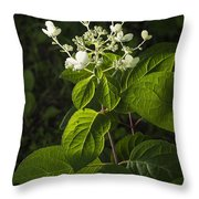 Shrub With White Blossoms Throw Pillow