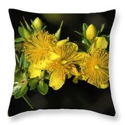 Shrubby St Johnswort Dsmf094 Throw Pillow