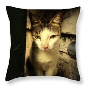 Shy Cat Throw Pillow