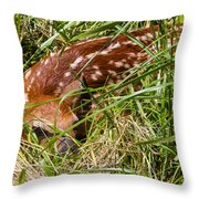 Shy Fawn In Meadow Throw Pillow