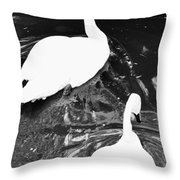 Shy Swans Throw Pillow