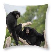 Siamang Monkeys Throw Pillow