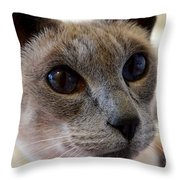 Siamese Cat Peers Into Unknown Throw Pillow