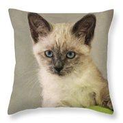 Siamese Kitten Throw Pillow