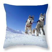 Siberian Husky Dogs Throw Pillow