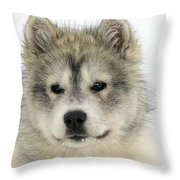 Siberian Husky Puppy Throw Pillow