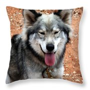Siberian Husky With Blue And Brown Eyes Throw Pillow
