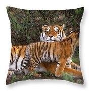 Siberian Tiger Cub Guarding Mom Wildlife Rescue Throw Pillow