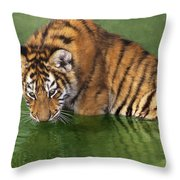 Siberian Tiger Cub In Pond Endangered Species Wildlife Rescue Throw Pillow