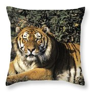 Siberian Tiger Endangered Species Wildlife Rescue Throw Pillow