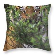 Siberian Tiger In Hiding Wildlife Rescue Throw Pillow