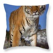 Siberian Tiger No. 1 Throw Pillow