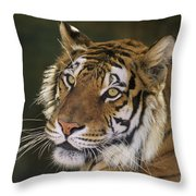 Siberian Tiger Portrait Endangered Species Wildlife Rescue Throw Pillow