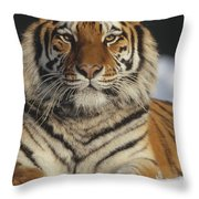 Siberian Tiger Portrait In Snow China Throw Pillow