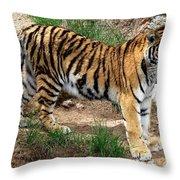 Siberian Tiger - Standing Throw Pillow