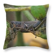 Side Of Big Brown Grasshopper Throw Pillow