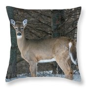 Side Of The Road Deer Throw Pillow