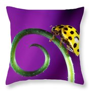 Side View Close Up Of Yellow Ladybug Throw Pillow by Panoramic Images