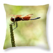 Side View Of A Calico Pennant Throw Pillow
