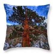 Sierra Pine Throw Pillow