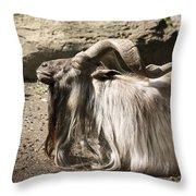 Siesta Under The Warm Sun Throw Pillow