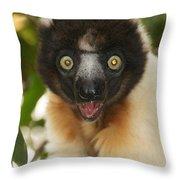 sifaka from Madagascar 8 Throw Pillow