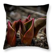 Sign Of Spring In Red Throw Pillow