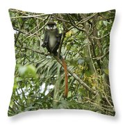 Silly Red-tailed Monkey Throw Pillow