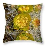 Silver Cholla Cactus Throw Pillow