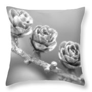 Silver Lining.... Throw Pillow