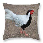 Silver Pheasant Male Throw Pillow