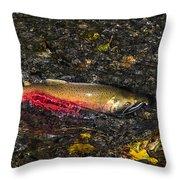 Silver Salmon Spawning Throw Pillow