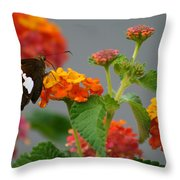 Silver-spotted Skipper Butterfly On Lantana Blossoms Throw Pillow