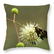 Silver-spotted Skipper On Buttonbush Flower Throw Pillow