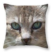 Silver Tabby But What Color Eyes Throw Pillow