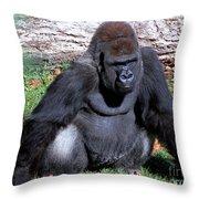 Silverback Western Lowland Gorilla Throw Pillow