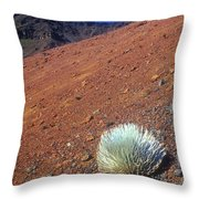Silversword Haleakala Crater Maui Hawaii Throw Pillow
